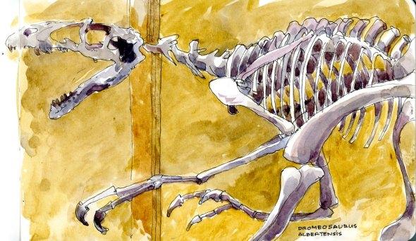 Dromeosaurus