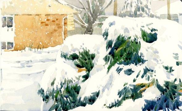 Evergreen under snow