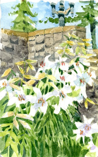 Portland Lilies