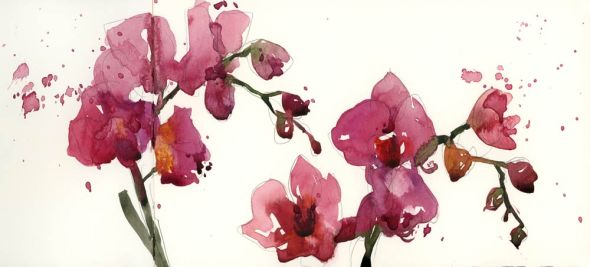 MoreOrchids