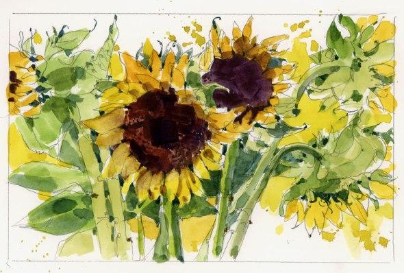 SunflowersA