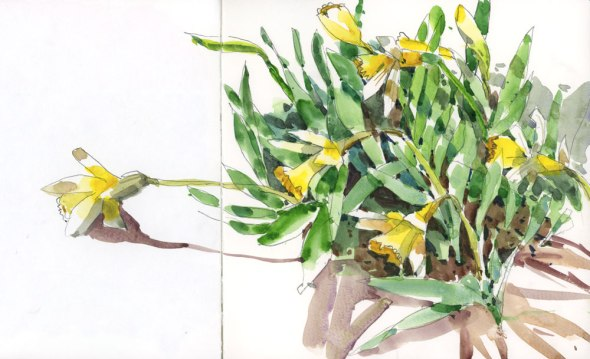 DaffodilBunch